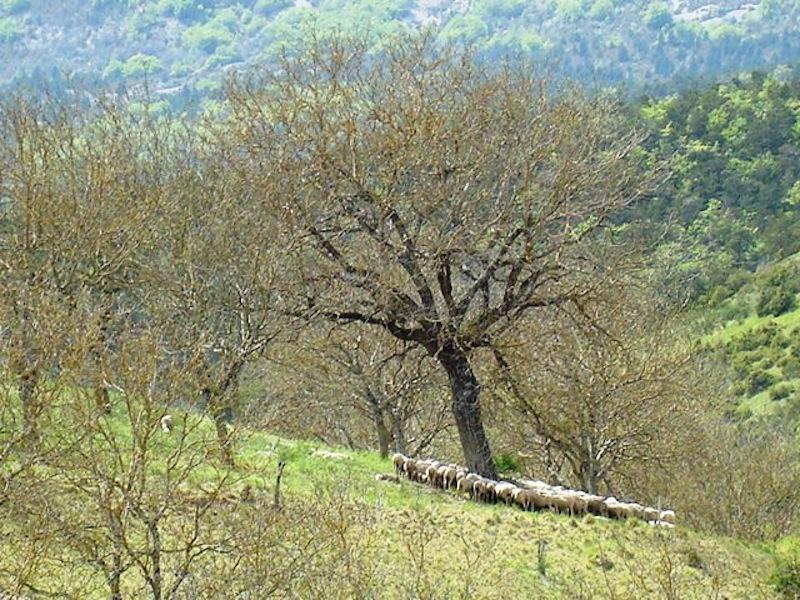 omgeving-schapen-st-nazaire